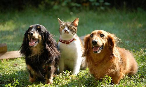犬と猫の健康管理